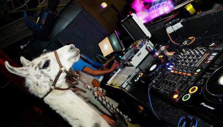 Llama_Mixing_958